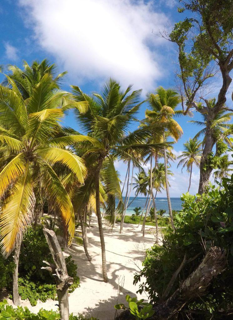 Envolez-vous pour la Martinique !